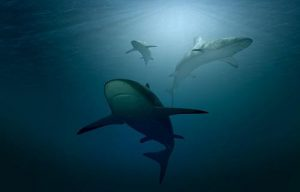 Sharks are circling your website